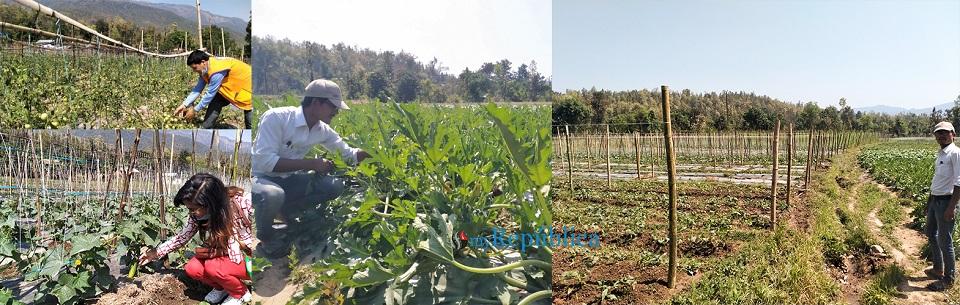 Amid apprehensions of food scarcity, urbanites resort to vegetable farming
