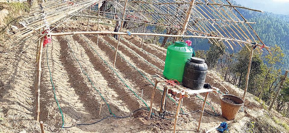 Khaniyabas locals attracted toward commercial vegetable farming