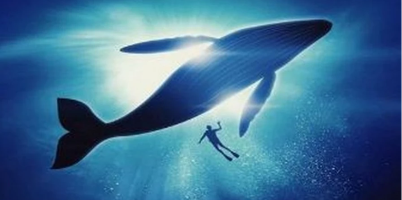 Lost in the Mediterranean, a starving grey whale must find his way home soon