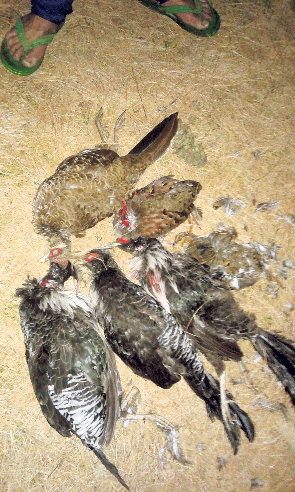 Wildlife meat openly bought and sold in Bajhang